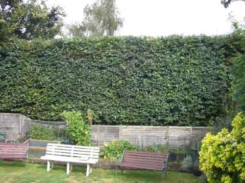 hedge-after